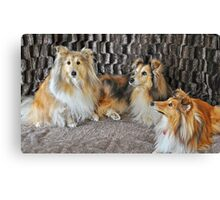 For the Love Of Shelties Canvas Print
