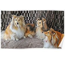 For the Love Of Shelties Poster