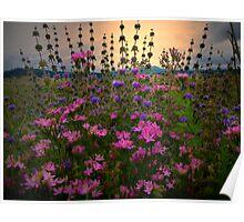 Field Mint - Wildflowers Poster