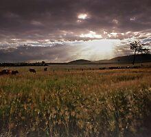 Grazing fields by imagekinesis