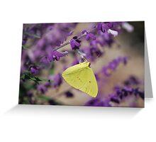 Cloudless Sulphur (Phoebis sennae) on Blue Salvia Greeting Card