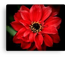 Crimson red Canvas Print