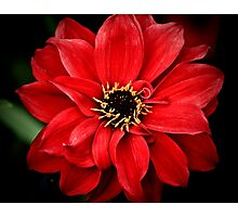 Crimson red Photographic Print
