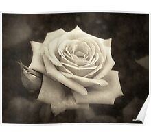 Pink Roses in Anzures 4 Antiqued Poster