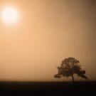 Isolation by Pene Stevens