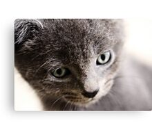 Kitten V Canvas Print