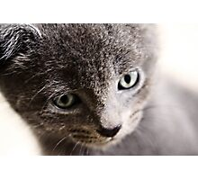Kitten V Photographic Print
