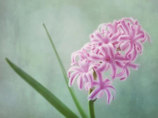 lady in pink by Priska Wettstein
