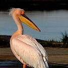 Pelican Watch by Adéle Van Schalkwyk