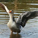 Luv' a goose by Tugela