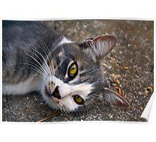 CAT PORTRAIT CLOSE UP Poster
