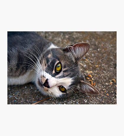 CAT PORTRAIT CLOSE UP Photographic Print