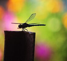 Dragonfly Silhouette by SusieG