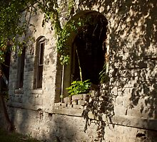 Vine Overgrowth by Keith Stephens