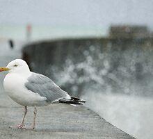 Seagull by Blandine Chambonneau - Schmitt