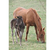 Foal Photographic Print