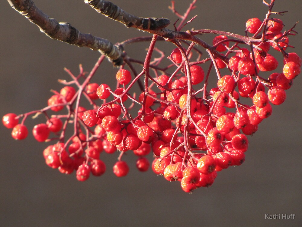 Sun Kissed Berries by Kathi Huff