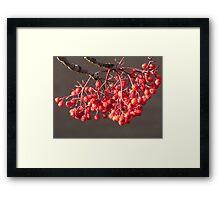 Sun Kissed Berries Framed Print
