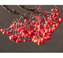 Sun Kissed Berries Photographic Print
