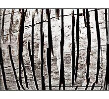 WOOD LINES Photographic Print