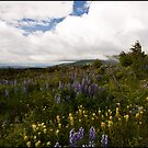 Field of Flowers - Anchorage  by Melissa Seaback