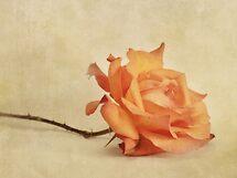 bellezza by Priska Wettstein