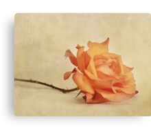 bellezza Canvas Print