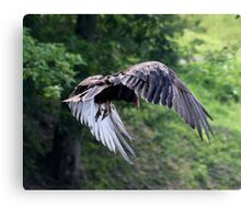 VULTURE IN FLIGHT Canvas Print