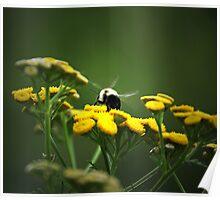 Buzz- Buzz -Buzz Said The Bumble Bee Poster