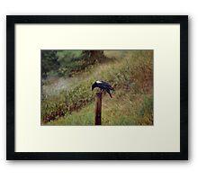 White Wing (Raven) Framed Print