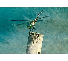 Wild Blue Yonder Photographic Print