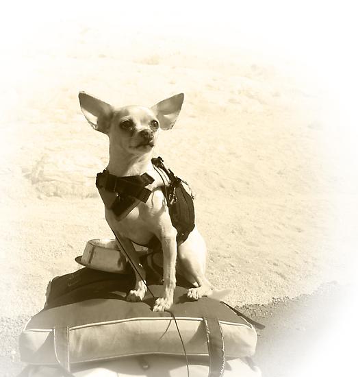 Chihuahua and the Kayak Adventure by Corri Gryting Gutzman