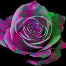 A Rose of Many Colors by AuntDot
