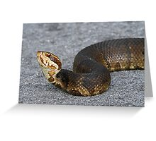 Cottonmouth(Water moccasin) Greeting Card