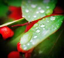 Red and Green by pnjmcc