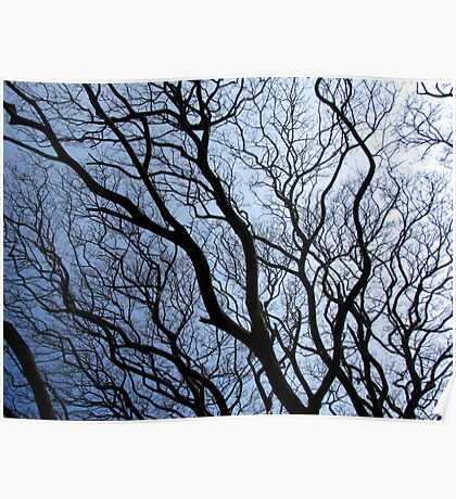 Twisted branches of trees Poster