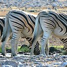 Zebra Lineup  by naturalnomad