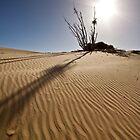 Winters Sun by David  Hibberd