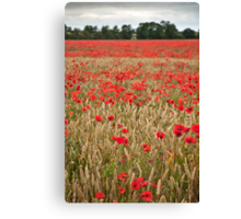 Lincolnshire Poppy Field Canvas Print