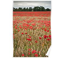 Lincolnshire Poppy Field Poster
