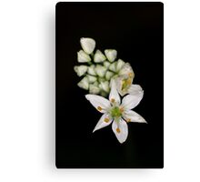 Life Cycle of Flowers Canvas Print