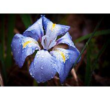Velvet Blue Photographic Print
