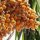 Betelnut by Shiju Sugunan