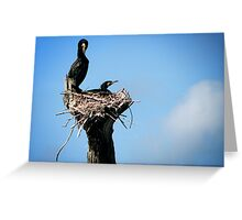 Bird's Nest Greeting Card