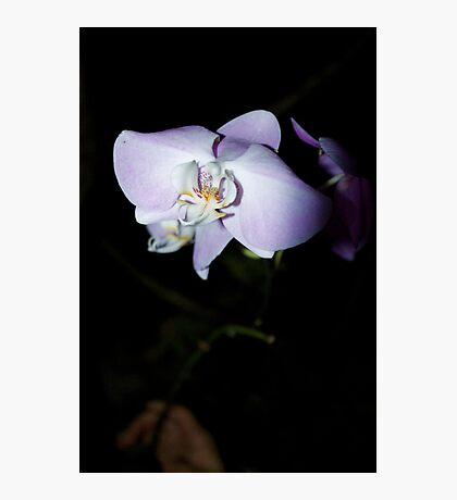 Solo Orchid Photographic Print
