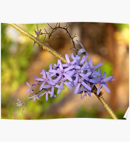 Queen's Wreath Flowers Poster