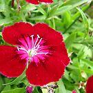 Flowers by Shiju Sugunan