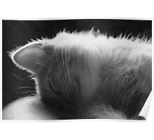 Sleepy Kitty Poster