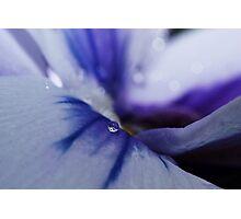 Tiny Beauty Photographic Print