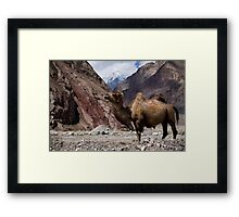 Camel on the Karakoram Highway Framed Print